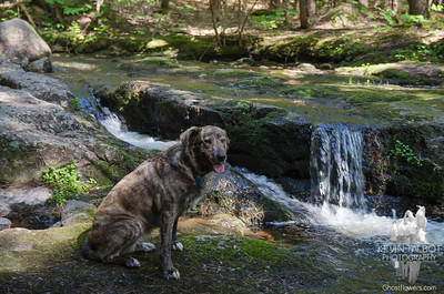 Madison Cascades/Hoyt Audubon Sanctuary 5-29-18