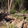 The trail is beneath the debris.