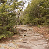The trail was a great mix of rock slabs and pine forests