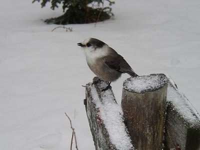 Pierce winter hike: Jan. 1
