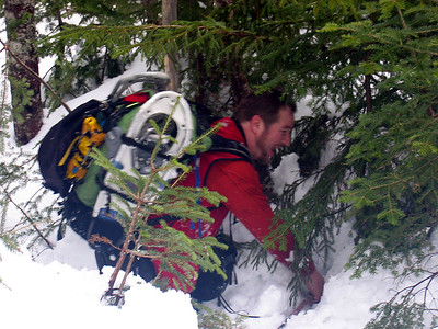 HikerBob was also spruce trap bound