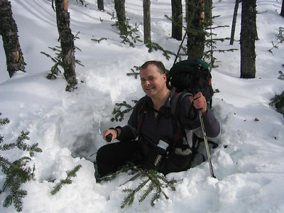 MichaelJ finds the mother of all spruce traps (picture courtesy of MichaelJ)