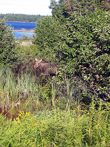 At least we saw a moose on the way home