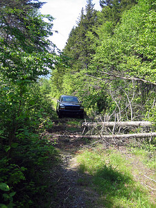 End of the drive up the logging roads