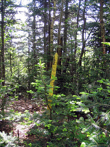 We walked up the logging road to this yellow boundary marker
