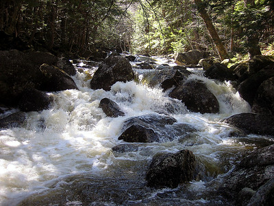 Harvard Brook had lots of whitewater rushing through it today