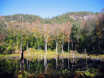 Trees reflecting in a beaver pond