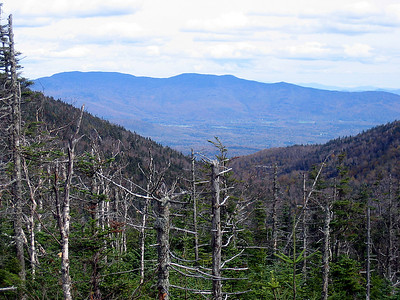 View over a blowdown patch