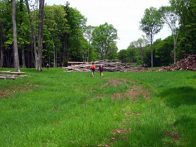 Walking through an old log yard