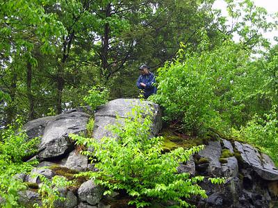 Greenwood atop a rock