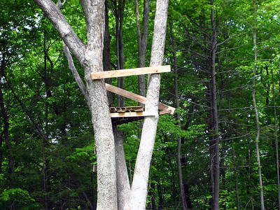 A tree stand in the meadow
