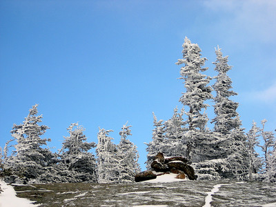 Blue skies over frosty trees