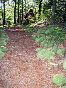 Moss lined trail
