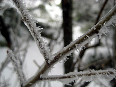 Icy shrub branch
