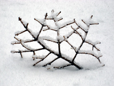 A fallen bit of branch covered with a dusting of snow
