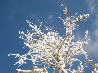 Rime ice on a tree
