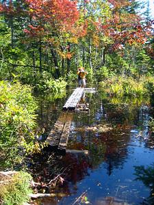 These bog bridges were floating in 3+ feet of water