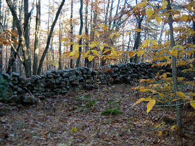Today's old stone wall