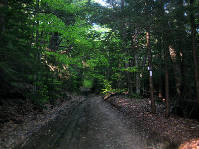 Sunday's hike was mostly along roads -- paved, woods and logging