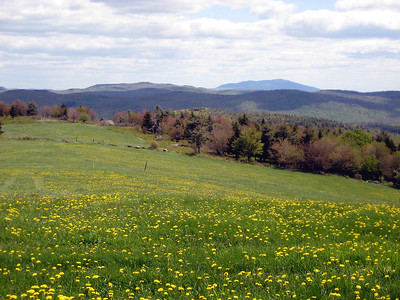 Pretty field with a view of Monadnock