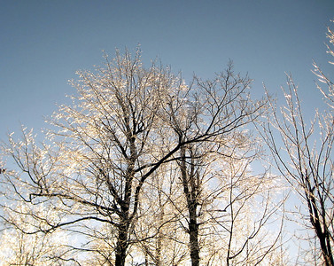 Icy trees at the Mount Crescent trailhead