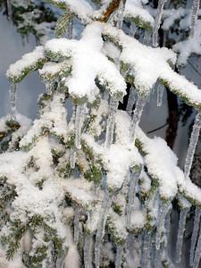 Pine-sicles.