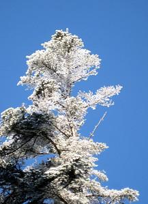 Yup, it's frosty tree time....