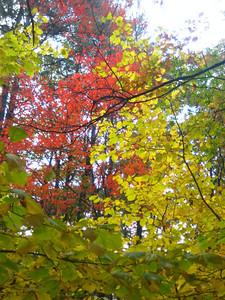 More pretty leaves