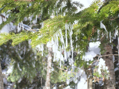 Icicles... the trees were spitting ice and snow all day