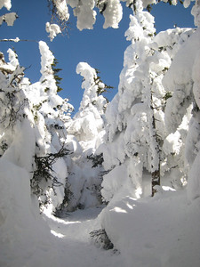 The snow covered trees on the ridge were beautiful!