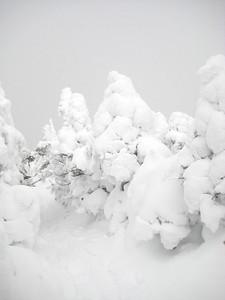 White sentinels