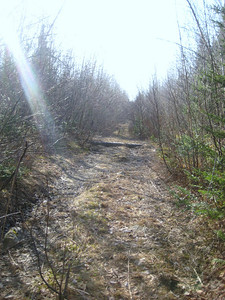 After failing to find the start of the closed Slide Brook trail, we headed up an old logging road to avoid walking 115.