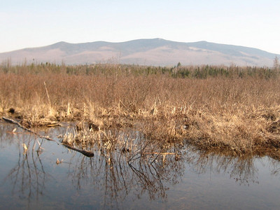 Pliny and Pilot ranges across the swamp