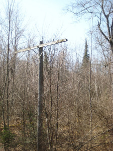 There were a few very old telephone poles in the swamp