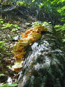 Bright orange fungi