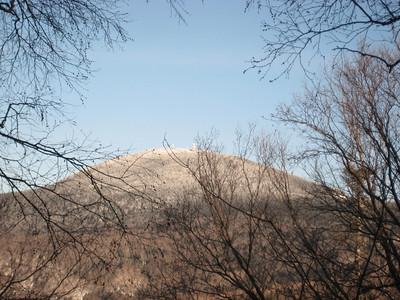 Pico Peak through the trees