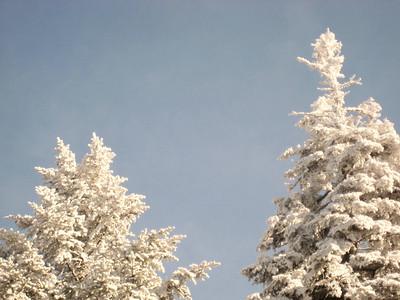 Frosty trees... my favorite