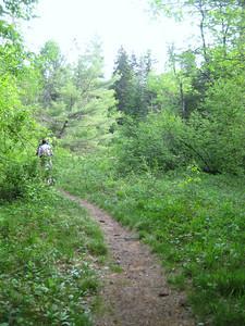 Easy walking on the Sawyer Pond Trail