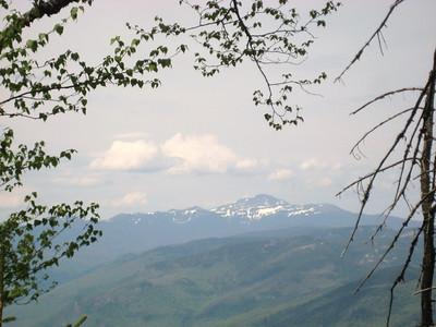 Mt. Washington through the trees