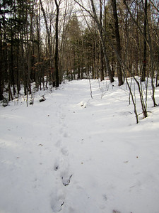About six inches of snow... it was a bit deeper on the Whittin Brook Trail.