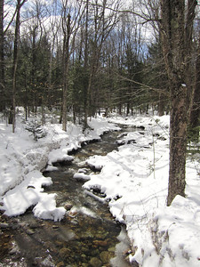 Following the brook at the base of the trail.