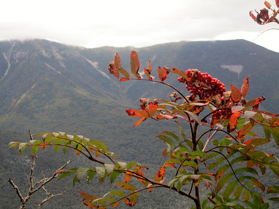 Mountain ash with Franconia Ridge in the background