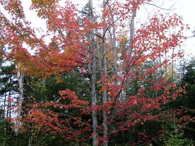 Foliage is past peak now.