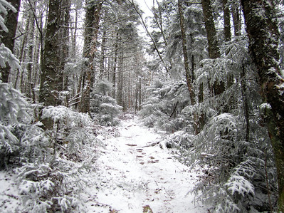 The road reaches winter