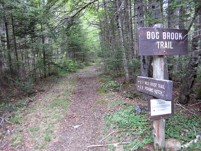 Heading out on the Bog Brook Trail