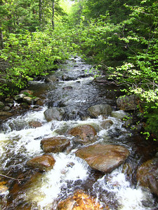 Wildcat River from the logging road