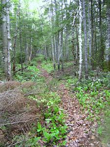 Beautiful stretch of trail....