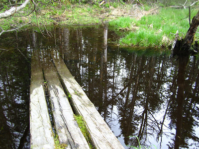 Thankfully, there was an old beaver dam nearby that I crossed on!