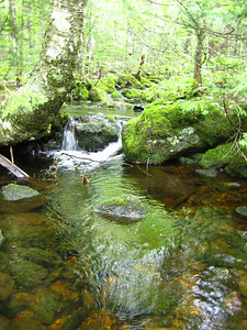 Just a pretty little brook