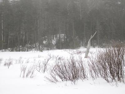 The trail follows a pretty beaver pond for a long while.